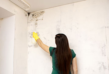Mold Removal Services | Drywall Repair & Remodeling Los Angeles, CA